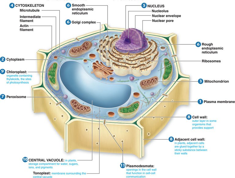 First quarter assignments 2015 mr hansons 7th grade science program plant cell diagram click here ccuart Choice Image